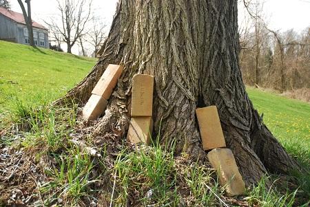 Ground with tree bricks