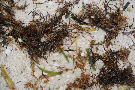 Ground with seaweed 3