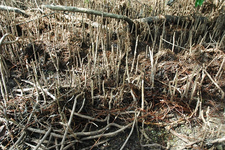 Ground with Upturned Roots