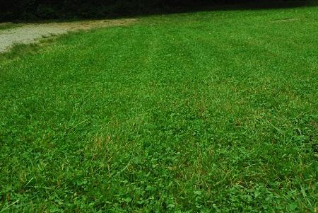 Moan lawn