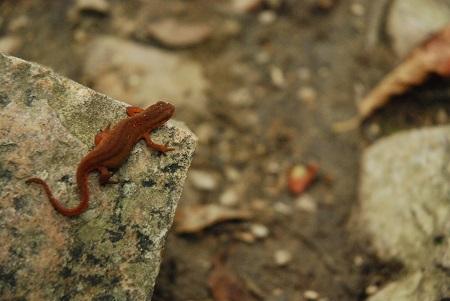 Ground with amphibian.jpg