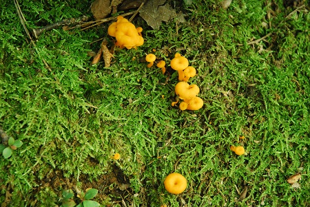 Ground with citrus fungus.jpg