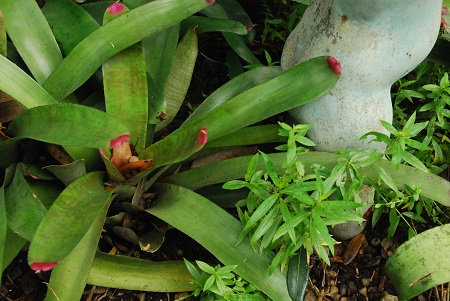 Ground with bromeliad.jpg