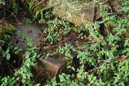 Ground with rusting hulk.jpg