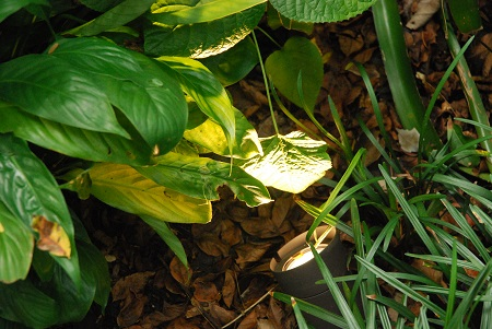 Ground with spotlit leaves