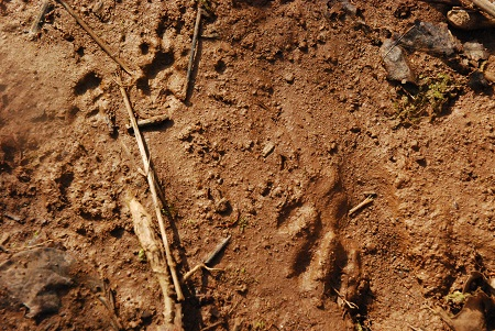 Ground with raccoon fingers.jpg