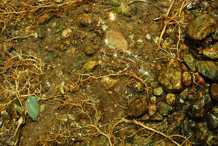 Ground with washed roots_825.jpg