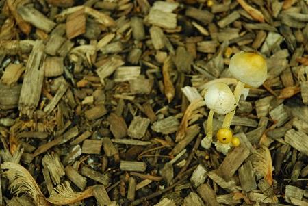 Ground with fungi_1211.jpg