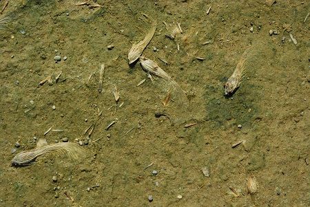 Ground with maple seeds_1192.jpg
