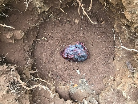 ground-with-placenta-for-apple-tree_0415.jpg