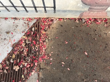 Ground with red leaves and urn_0935.jpg