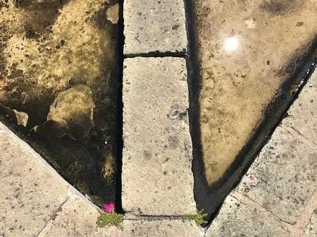 ground-with-tadpoles_0806.jpg