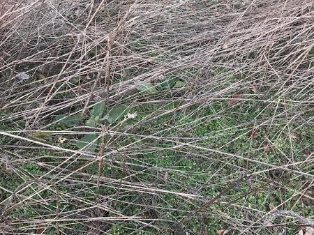 Ground with fallen stalks_1134