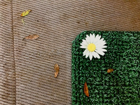 Ground with daisy_1256
