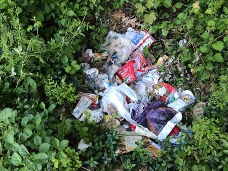 Ground with trashy nest_2786